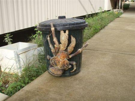 coconut-crab.jpg?w=450&h=337