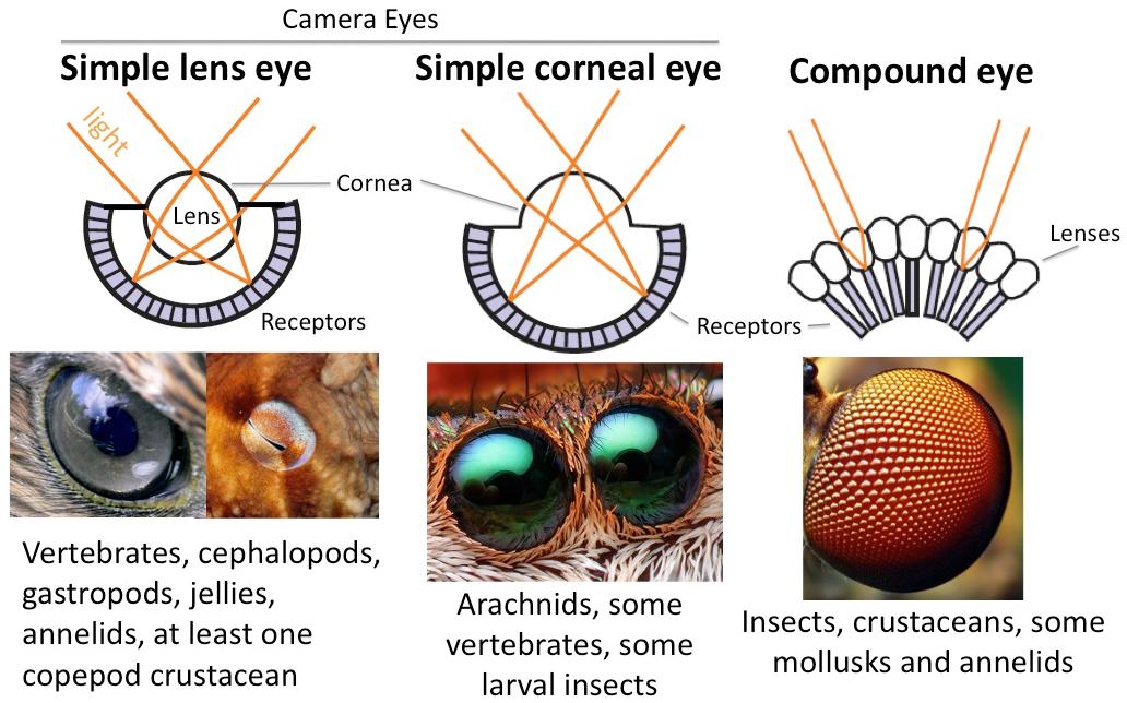 [Image: eyecomparisonchart.jpg]